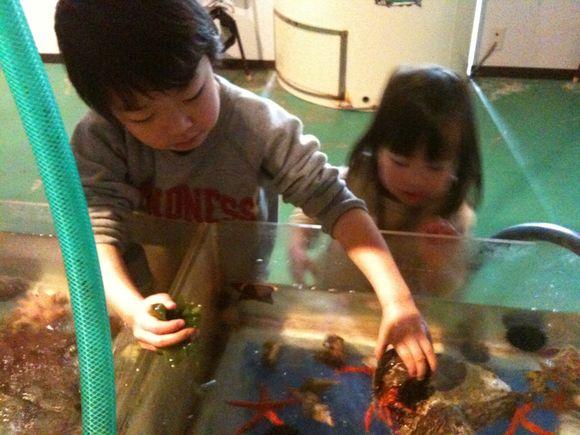 なぎさ水族館でなまこをさわる二人