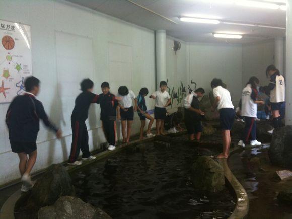 安下庄小学校6年生のみなさんが社会見学でエサやりしています。