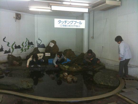 タッチングプールで鮫肌体験中の奥さまたちです。