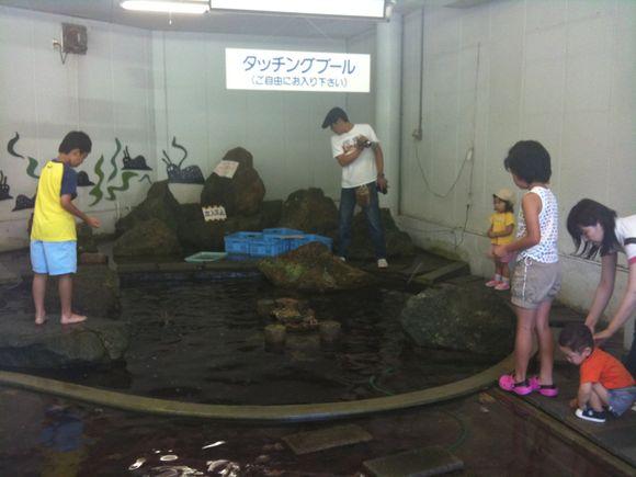 毎日お昼時になるとタッチングプールのお魚たちに餌やり体験できますよ!