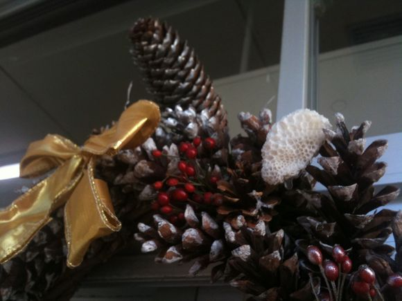 世界初ニホンアワサンゴのクリスマスリース!