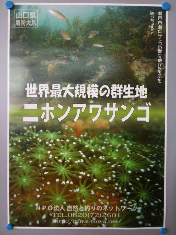 ニホンアワサンゴの新ポスター完成!