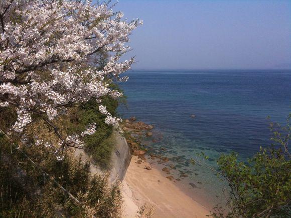 陸奥記念館の屋外展示場の桜吹雪