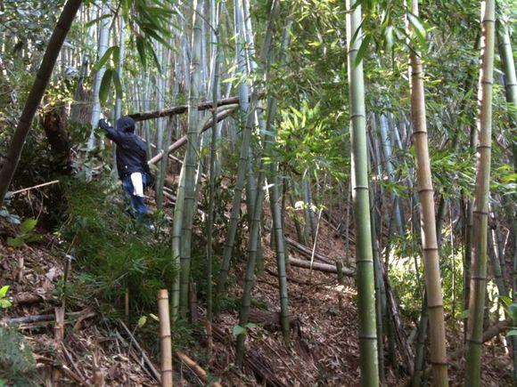 伊保田の山で竹伐り隊
